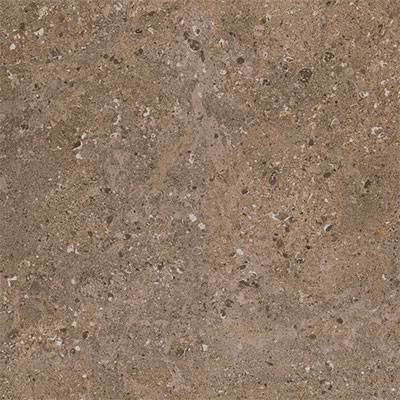 Daltile Dignitary 12 x 24 Unpolished Herald Brown